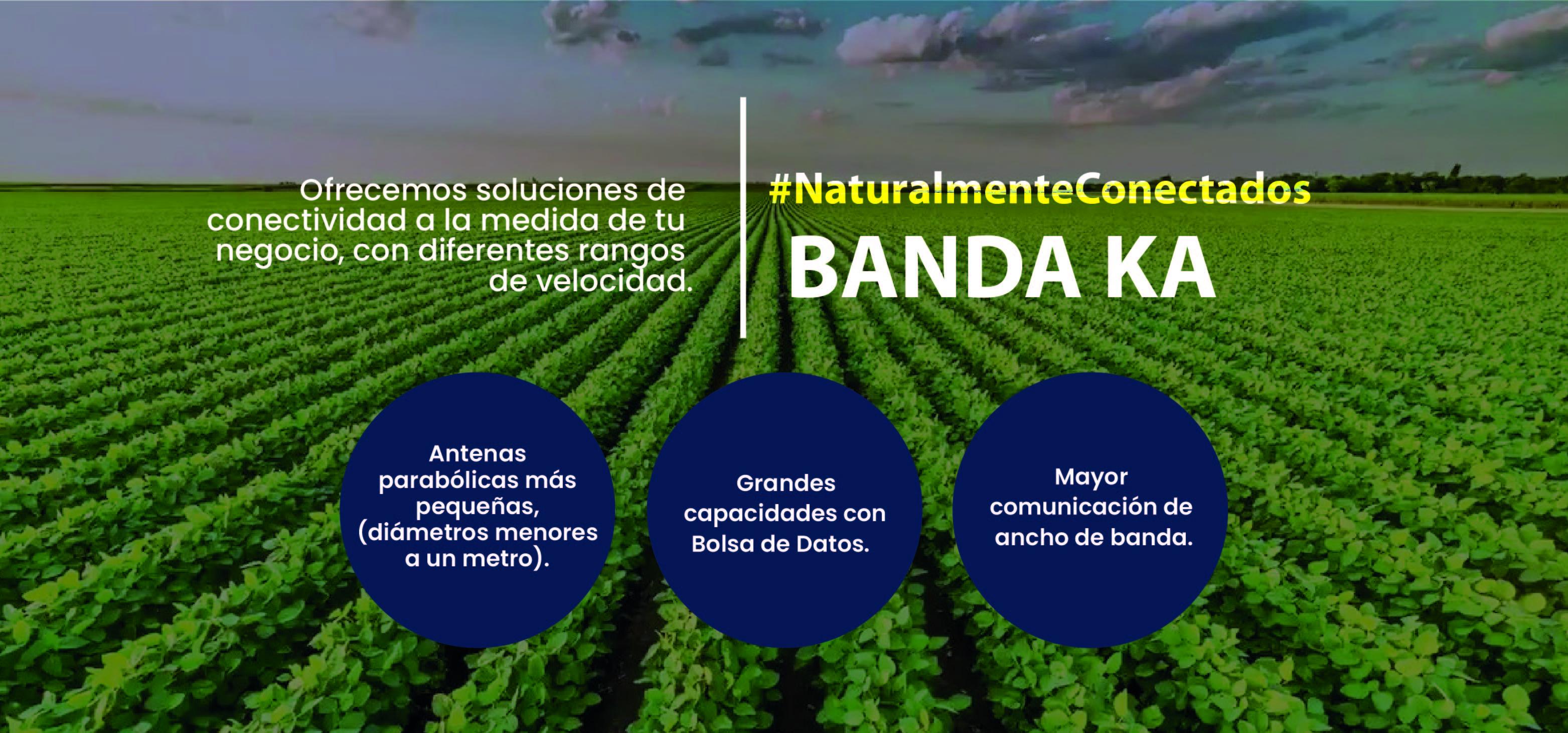 pagina web - BANDAS 2021-02